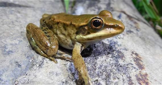 Anfibios: olvidados en los sistemas de áreas protegidas