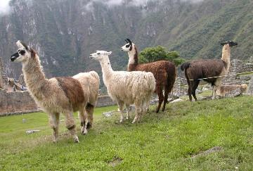 Decir que Perú es un país minero refleja la incapacidad estatal para ofrecer otras salidas