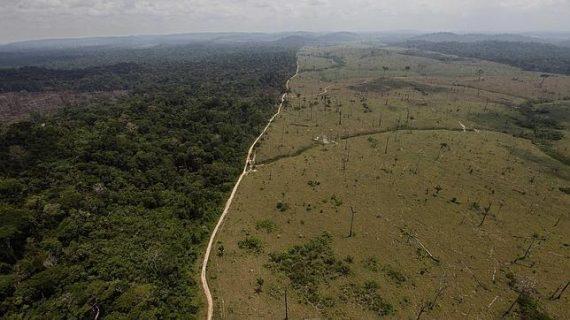La rápida transformación de la Amazonia: causas y ritmos