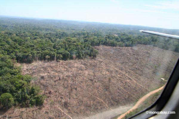 Deforestación amazónica acelera el cambio climático