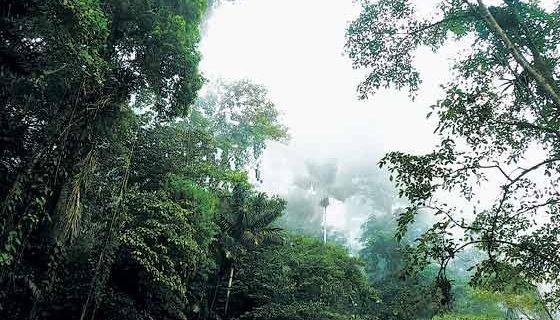 Biodiversidad colombiana está en riesgo