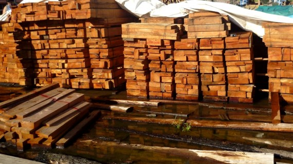 El mayor decomiso de madera ilegal de la Amazonia peruana