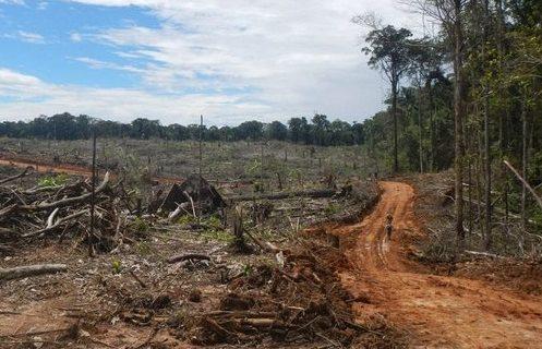 La deforestación sigue golpeando a América del Sur