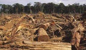 Amazonia de Brasil alcanzó mayor tope de deforestación en la última década