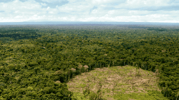 Perú pierde 427 hectáreas de bosques por día