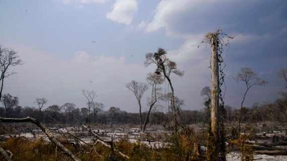Deforestación no cesa ni con la pandemia