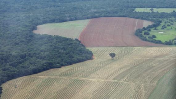 Confirman aumento deforestación en Amazonia de Brasil