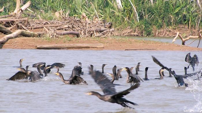 Bolivia: contratos para explorar en 11 de 22 áreas protegidas