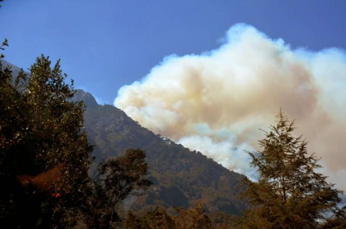 Incendios causan un desastre ecológico en el sur de Chile