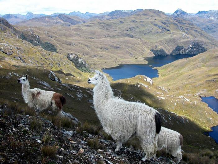 Once áreas concentran la biodiversidad de Ecuador
