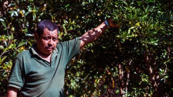 Programas de sustentabilidad por comunidades indígenas