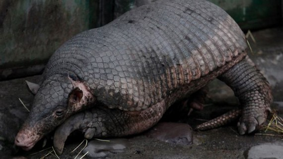 Diez especies amenazadas por la minería ilegal en Colombia