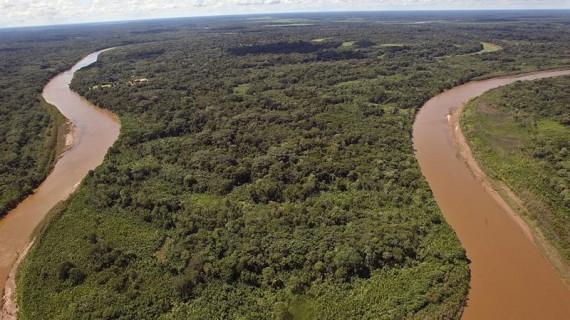 Ecología política de la conservación de los bosques