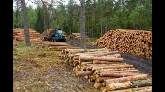 Deforestación global: Brasil encabeza la pérdida de bosques; le siguen Colombia, Bolivia y Perú