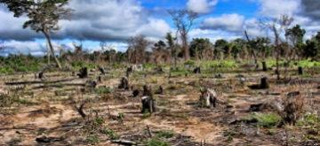 Se perdieron 178 millones de hectáreas de bosques en 20 años